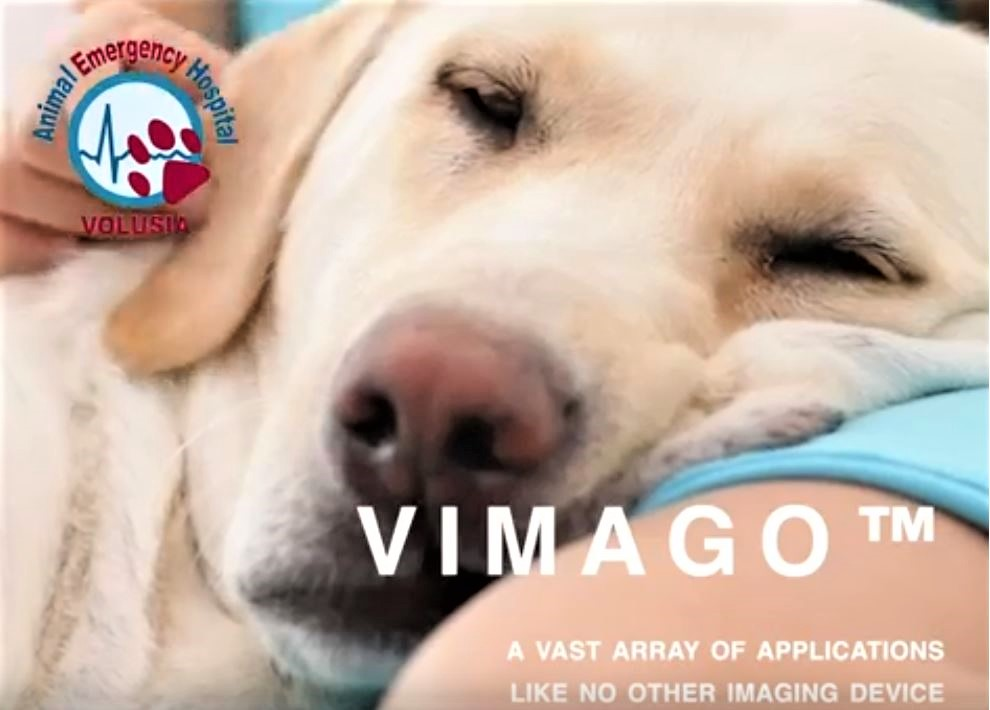 VIMAGO PRESENTATION FOR PRIMARY CARE VETERINARIANS