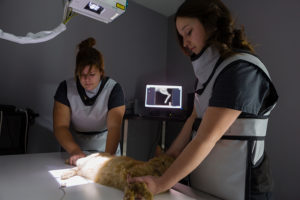 Veterinary Emergency Fees Are Higher Than Your Typical Primary Care Clinic – Here's Why