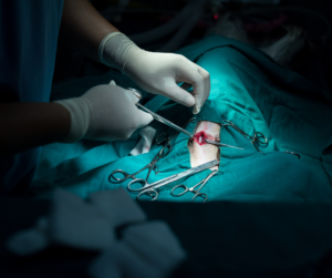 Surgical procedures performed at AEHV